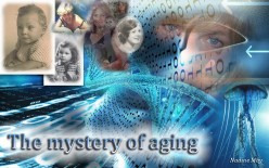 Can aging be halted or reversed?