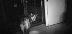 How to Use Dogs in Paranormal Investigations