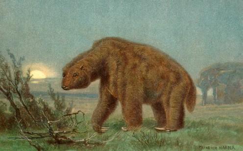 Megatherium Cuvier, 1796