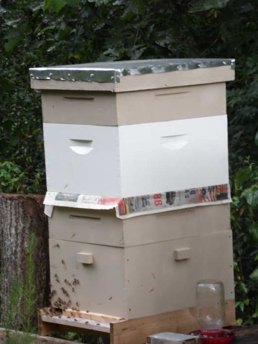 Combining beehives with newspaper.