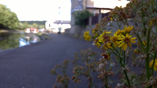 Bit Of Yellow Bokeh From the 930