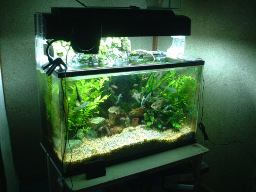If you care this much about your tank, care enough to give your fish the best food.