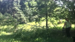 A regular occurrence on a wooded acreage is trees getting blown over in high winds.