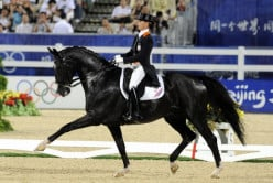 Dressage 101: What You Need to Know