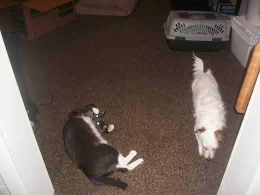 Is there a way cats and dogs can get along, at least enough to communicate ideas?