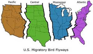 Flyway Map for all regions