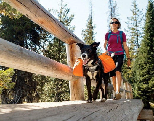 Let your dog carry some of the safety gear in his own backpack.