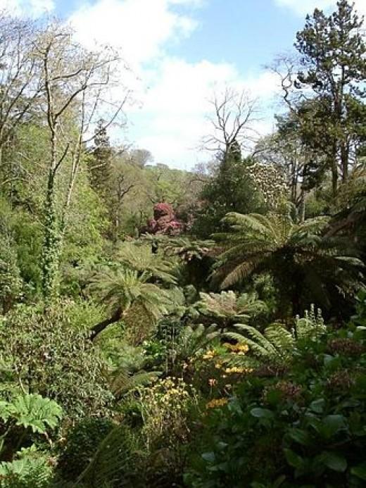 Lost Garden of Heligan - Cornwall