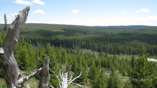 The forest that surround the Upper Geyser Basin