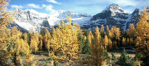Larch Valley Alberta