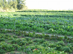 How to grow Healthy Food from Organic Farming?