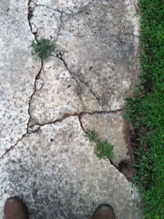Old concrete crumbling along the sides of a vintage driveway.