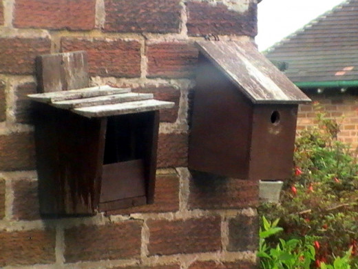 The nestbox on the left with its open front is usually favoured by birds like robins and flycatchers and robins, while the right one with its tiny hole is favoured by tits. Both of these are vulnerable to the heavy duty bill of the woodpecker.