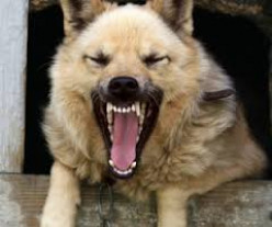 Causes, Symptoms and Treatment of Rabies