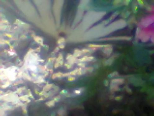 A butterflies pleasant moment.
