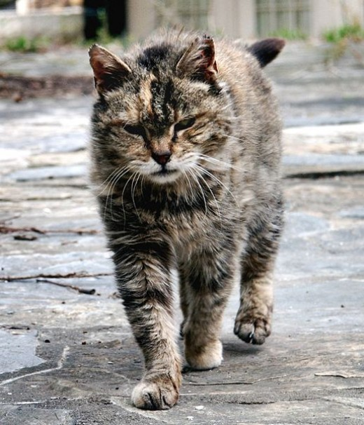 Feral cats need love too!