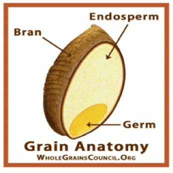 This diagram clearly shows the three naturally-occuring parts: bran, endosperm and germ.