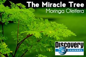 Discovery Channel documentary about The Miracle Tree.
