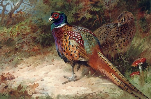 Painting by Archibald Thorburn