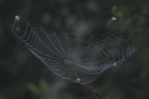 Spider Web in Fog