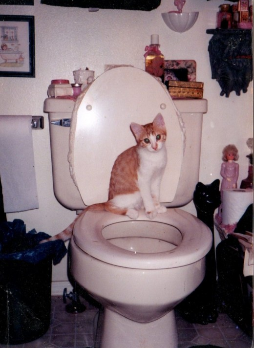 Setzer as a young kitten. Should I have trained her in the toilet? She seemed pretty comfortable.