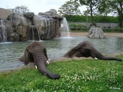 Elephants lay in leisure in the water at the Roger Williams Zoo Park in Providence, RI.