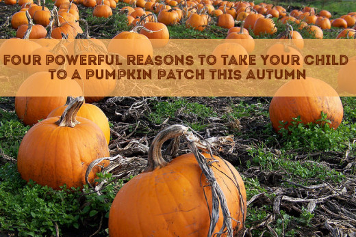 Need a reason to take your child to the pumpkin patch this fall? Here are some good ones!