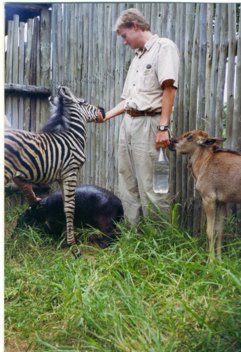 This is me with Lucky (zebra), Hongonyi (wildebeest) & Tinkerbell (hippo). All about 2 weeks old at this stage.