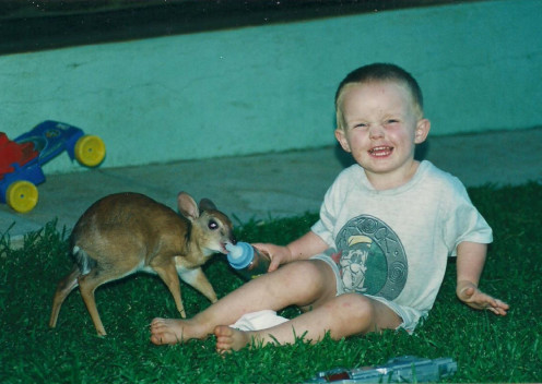 Cameron helping out some more with a Suni, a small antelope species.