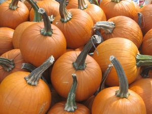 Pumpkins were among the produce they gathered