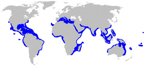 Areas that the Blacktip Shark has been found to inhabit.