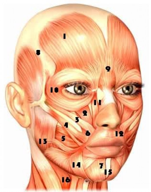 Facial Workout-the new age anti-wrinkle treatment | hubpages