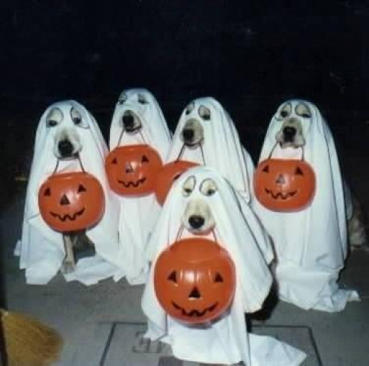 Cute Halloween Costumes for Dogs | HubPages