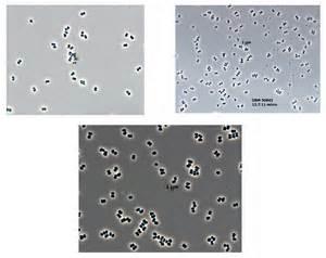 Clean Room Microbes
