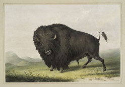 George Catlin: Native American paintings -related to Frederick Remington, illustrations plains Indians