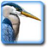 Chaz Faruk profile image