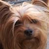 choosehappy profile image
