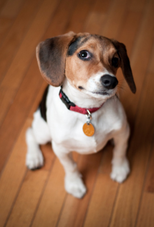 Best Hardwood Floor For Dogs flooring Lets Look At The Pros And Cons Of Many Different Flooring For Dogs Options To Help You Make That Decision