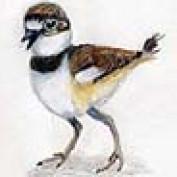 Desertdarlene profile image