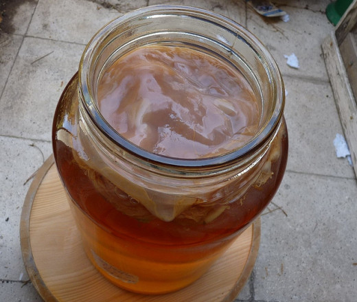 SCOBY sitting on top of kombucha tea