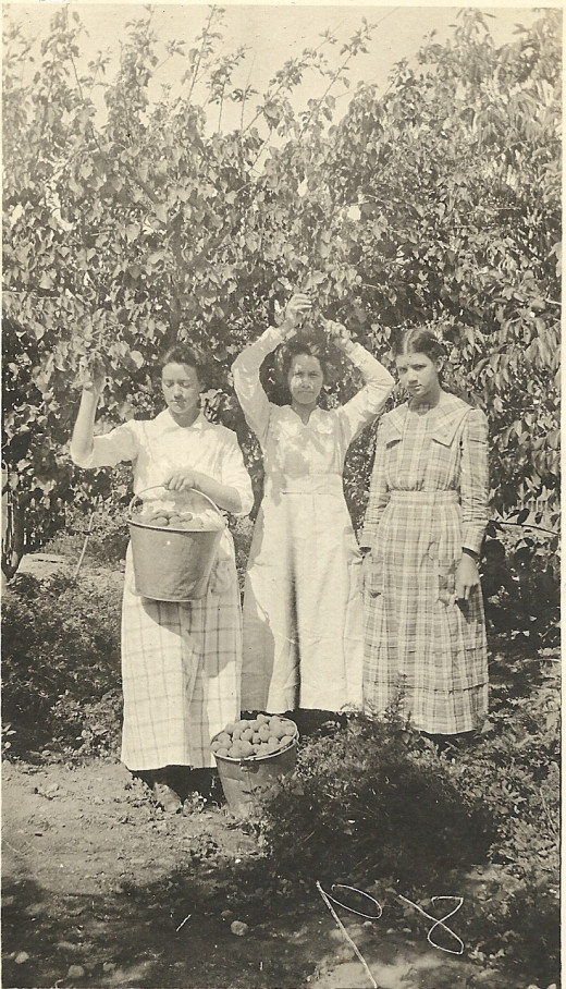 Photo of my great-aunts gleaning apricots in 1926.