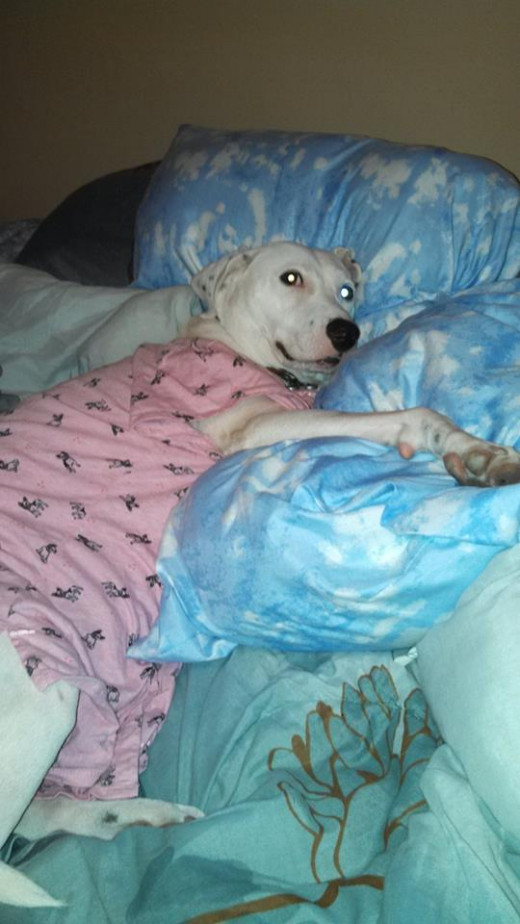 How can you not love a dog who wears pink pajamas