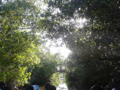 "Caroni Bird Sanctuary "" My Third Nature Trip with my sister"""