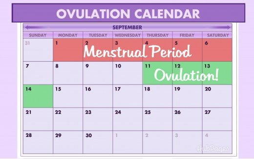 Menstrual cycle calculator clomid