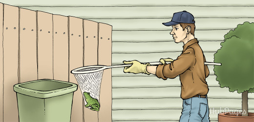 How to Eliminate, Kill, or Get Rid of Frogs | Dengarden
