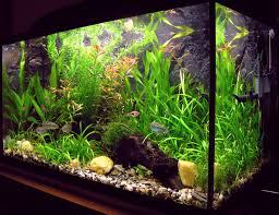 Choose Aquarium Plants That Suit Your Fish