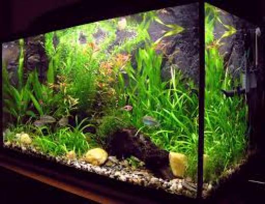 Choose Aquarium Plants That Suit Your Fish