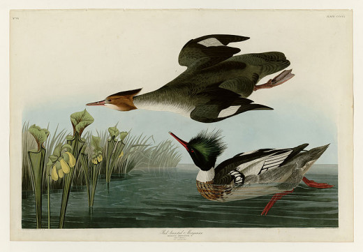 Birds of America John James Audubon