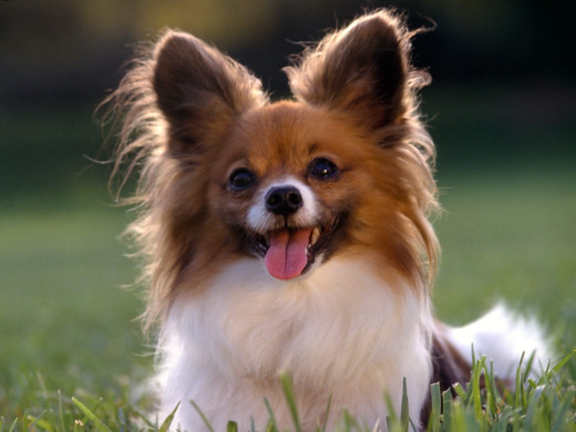 Can Kidney Failure In Dogs Be Reversed