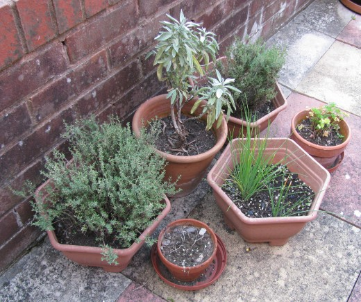 Parsley, Sage & Thyme - just need the Rosemary!